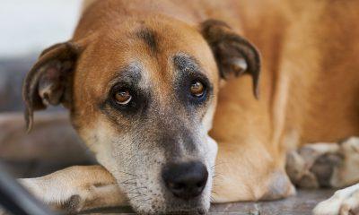 Brown cute dog portrait